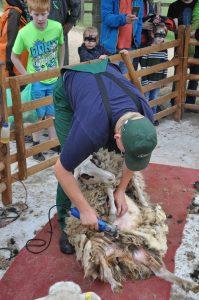 Schafschurfest