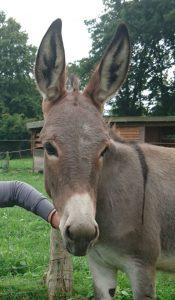 Palmsonntag: Unser Esel Giny begleitet die Weezer in der Kirche