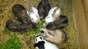 Ostermontag: Programm mit dem Geflügel- und Kaninchenzuchtverein